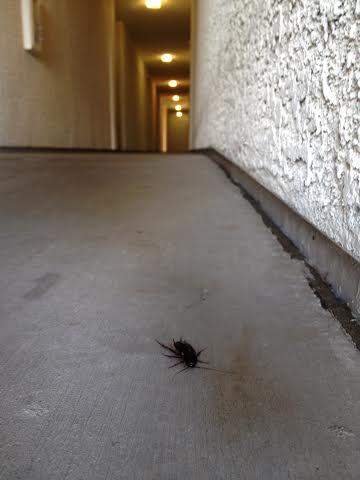 July 11 roach
